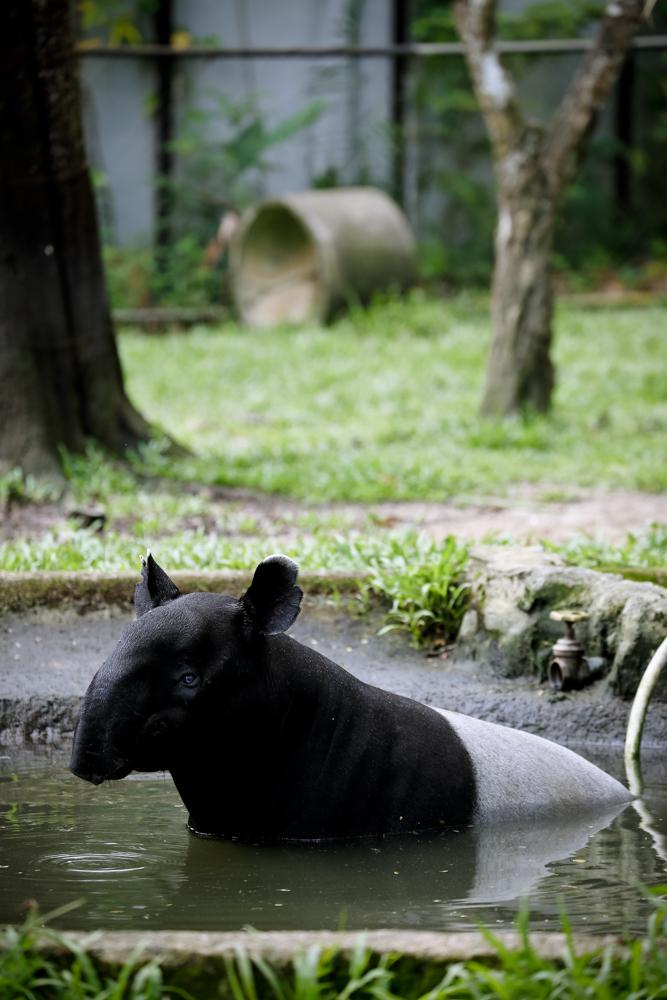 2015.8.16-zoo-negara-dad-lores-106