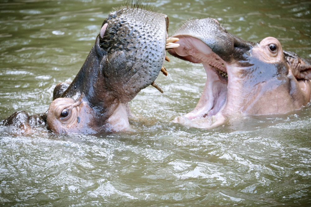 2015.8.16-zoo-negara-dad-lores-122