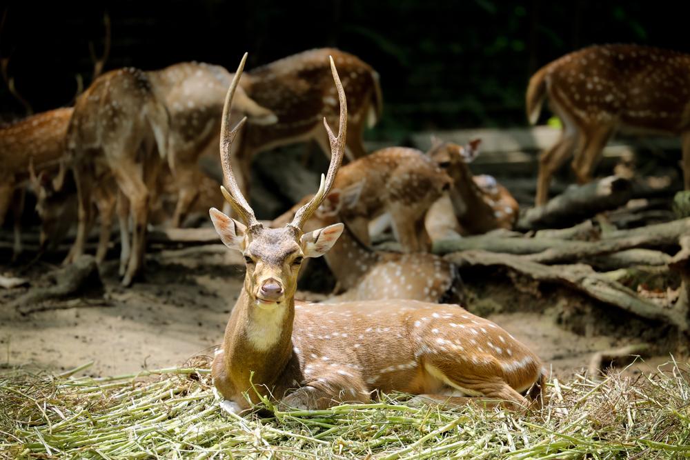 2015.8.16-zoo-negara-dad-lores-26