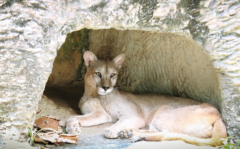 2015.8.16-zoo-negara-dad-lores-36