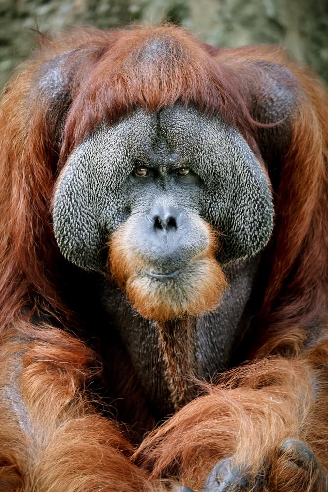 2015.8.16-zoo-negara-dad-lores-76