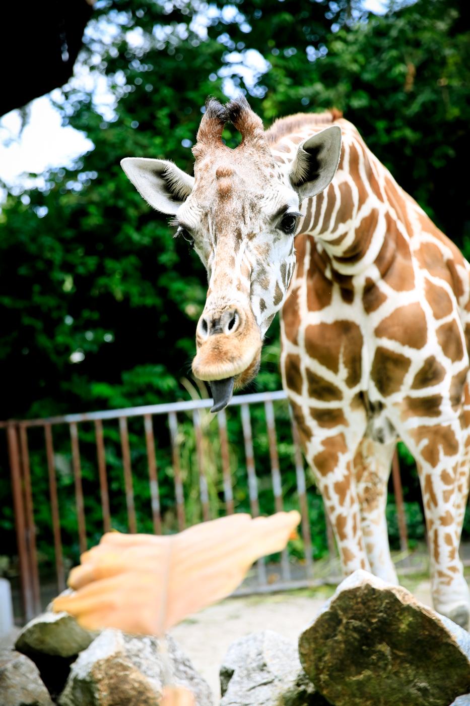 2015.8.16-zoo-negara-van-lores-154