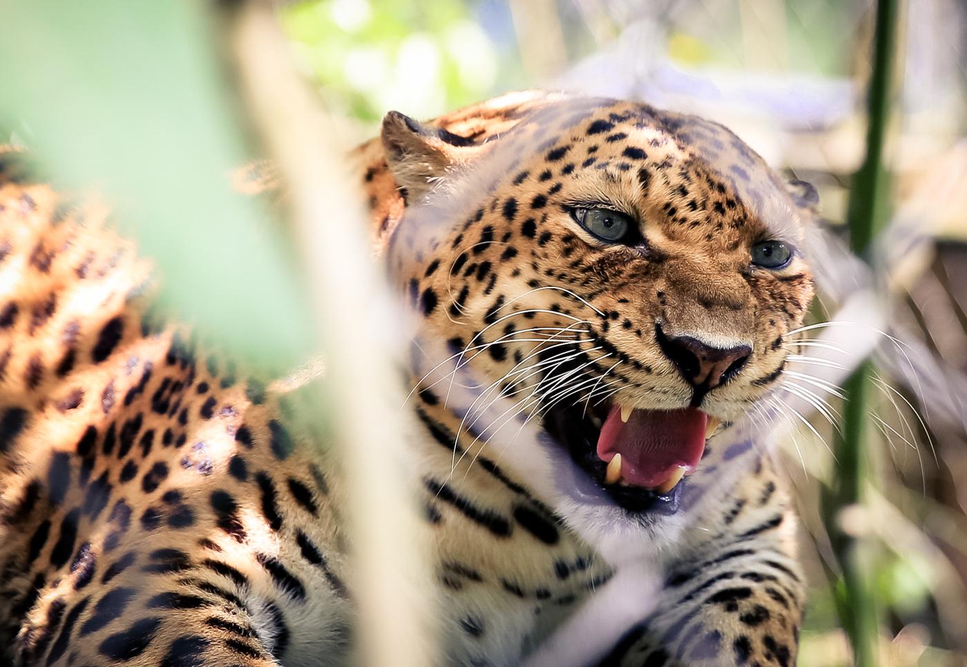 2015.8.16-zoo-negara-van-lores-161