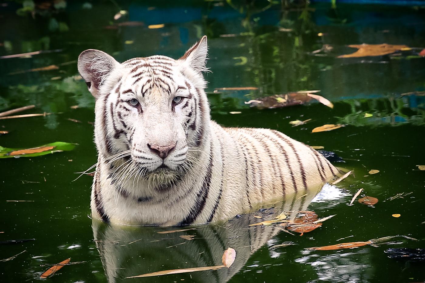 2015.8.16-zoo-negara-van-lores-163