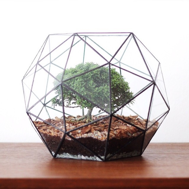 terrarium-a and e