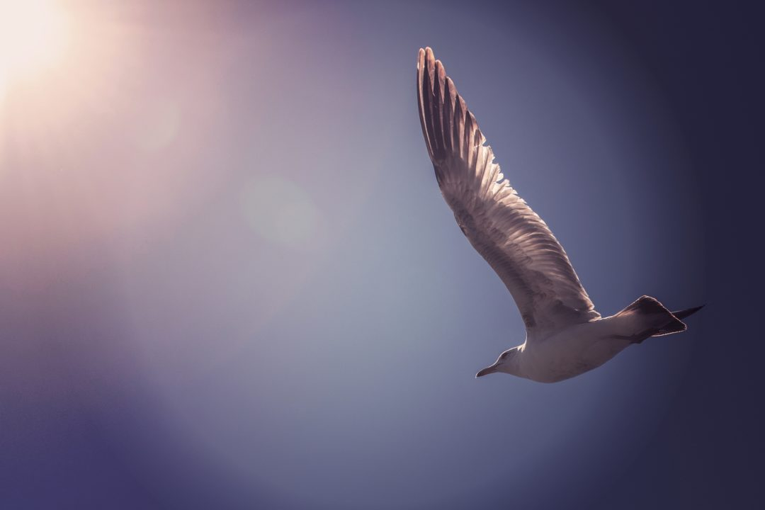 Seagull flying - Taking Personal Responsibility article